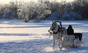 Horse & Buggy Rides along Niagara Parkway
