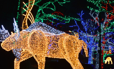 Moose Illuminations Display
