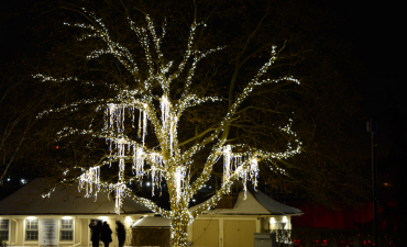 Spanish Moss Trees Winter Festival Of Lights Niagara Falls